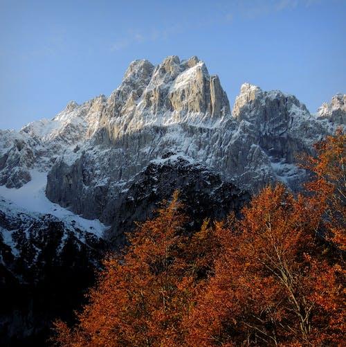 Gratis stockfoto met blauwe lucht, bomen, herfst