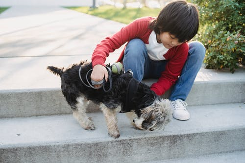 Attentive ethnic child embracing purebred dog while sitting on staircase in city on summer day