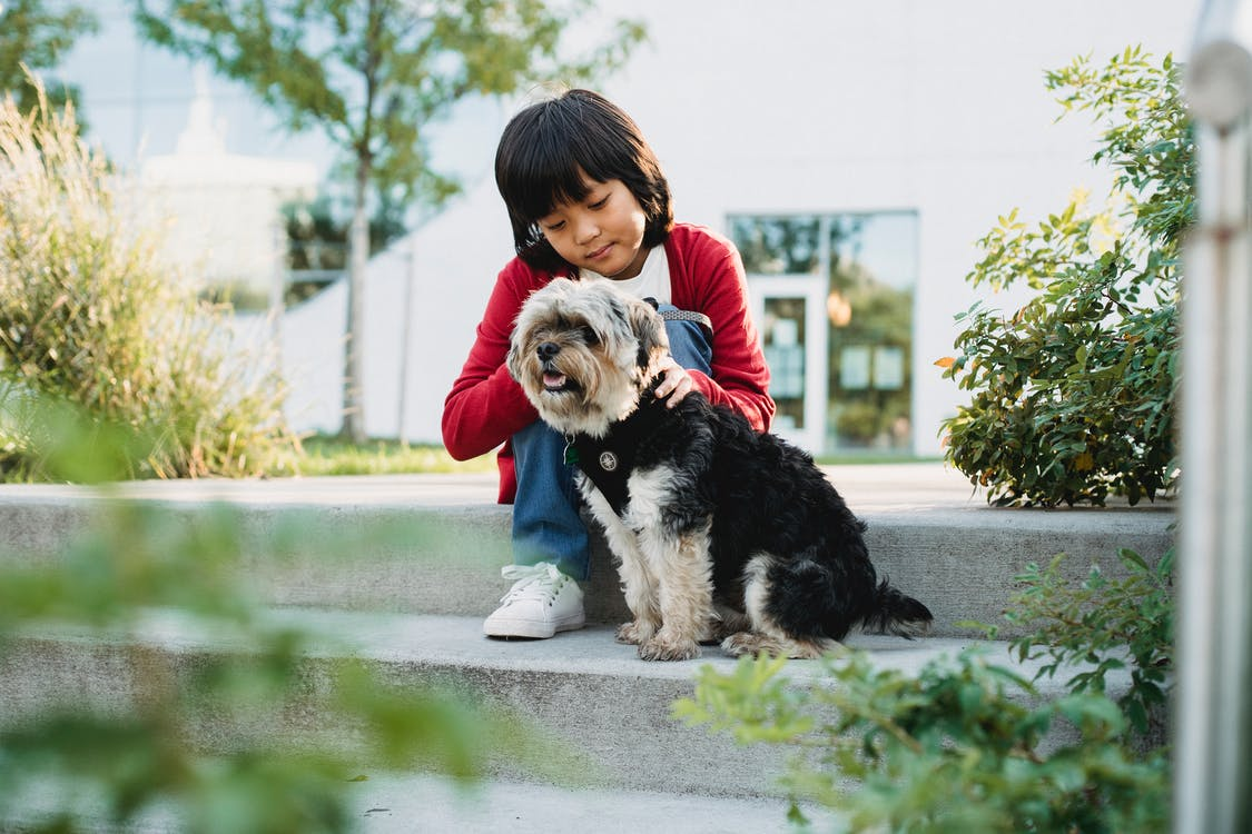 A Child Showing Love And Affection To A Dog
