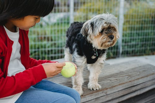 Crop ethnic kid with small ball resting near adorable purebred dog and grid fence in daylight