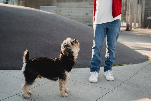 Curious Dog Looking At A Child Standing on Pavement