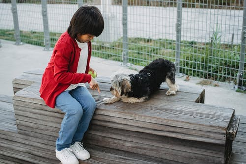 From above of Asian child pointing with finger at platform while training intelligent dog in town