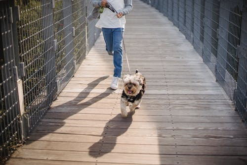 Crop faceless kid holding leash while jogging with cute puppy on wooden footbridge
