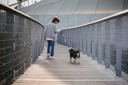 Faceless boy with dog on footbridge