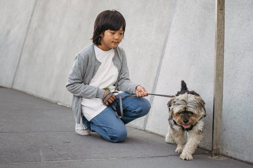 Asian kid in casual outfit squatting and holding leash with dog while spending weekend together