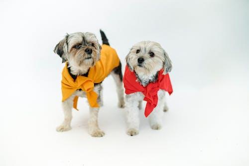Cute purebred dogs in bright superhero capes