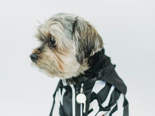 兜帽, 冷色調, 創作的, 動物 的 免费素材图片