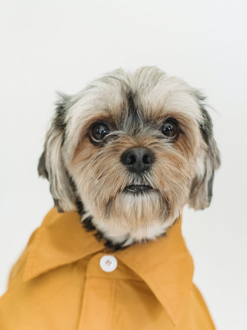 Cute dog in bright shirt on light background