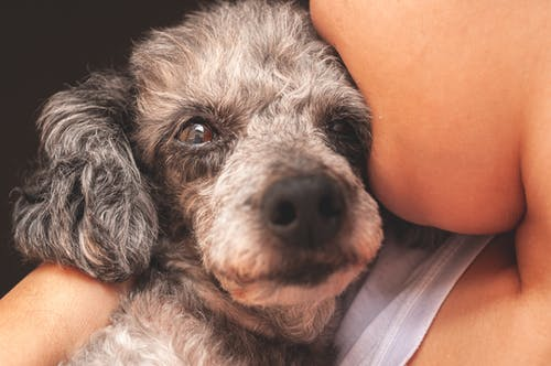 Foto stok gratis , Abu-abu, anjing