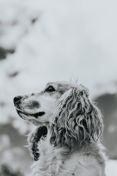 Fluffy gun dog under cloudy sky