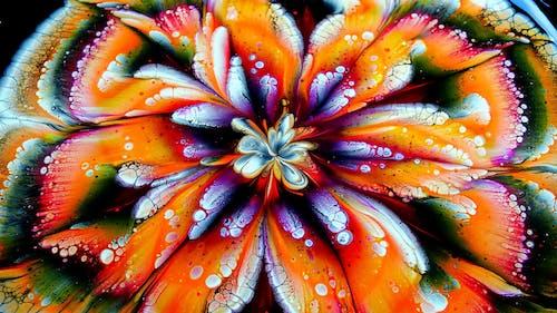 คลังภาพถ่ายฟรี ของ กลีบดอกไม้, การระบายสี, กำลังบาน