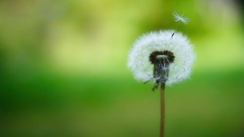 Бесплатное стоковое фото с волосатый, дикая природа, лето
