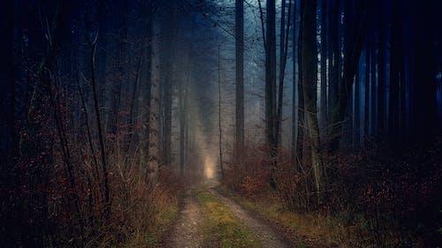 Бесплатное стоковое фото с дерево, жуткий, зима