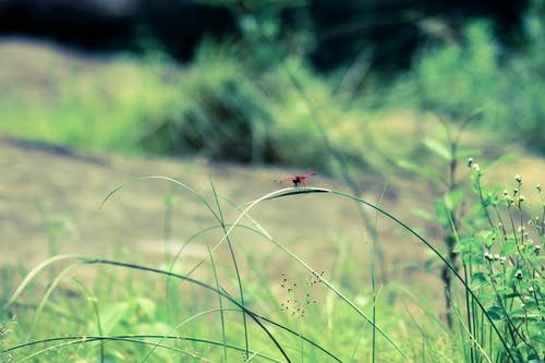 Free stock photo of canon, dragonflies, mothernature