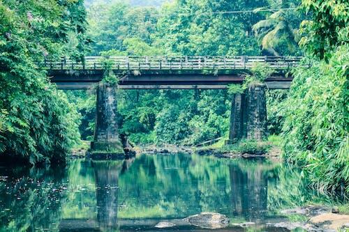 Free stock photo of bridge, canon, vintage