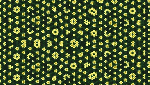 Yellow Flowers With Black Background