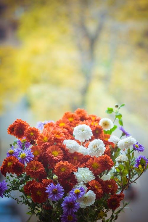 bouquet, brillant, brouiller