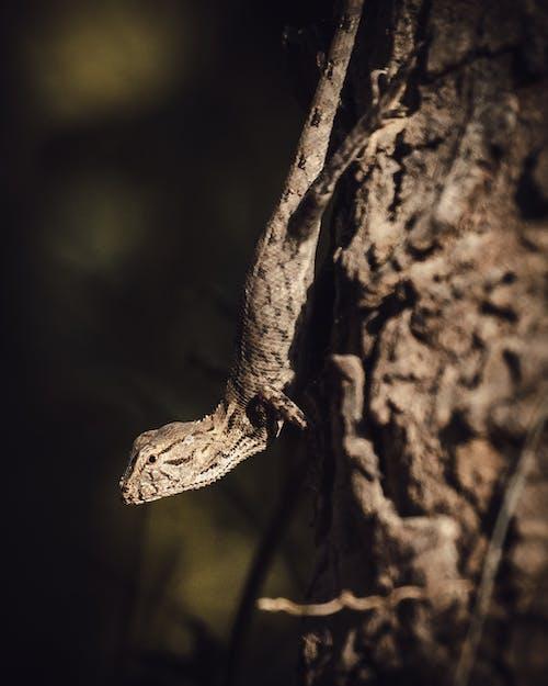 Brown and Black Lizard on Brown Tree Trunk