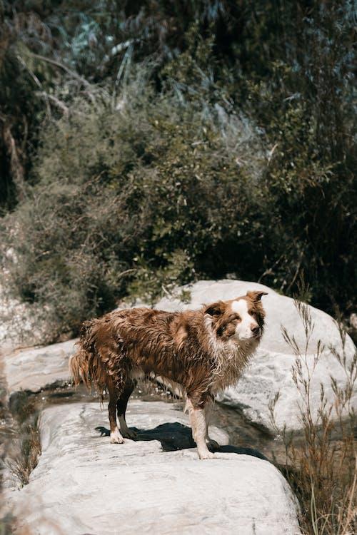 Безкоштовне стокове фото на тему «власник собаки, камені, надворі»