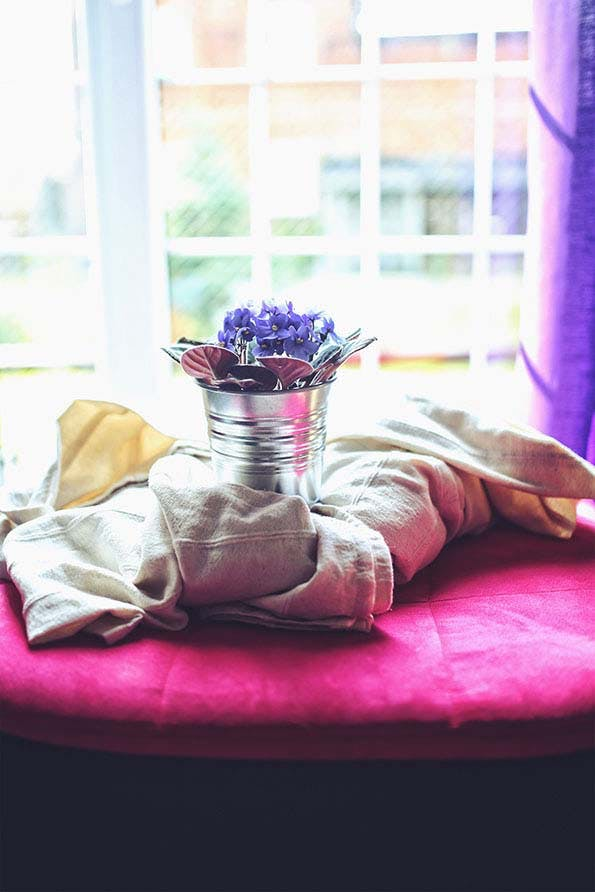 Ilmainen kuvapankkikuva tunnisteilla afrikkalainen violetit, auringonvalo, elämäntapa, huone