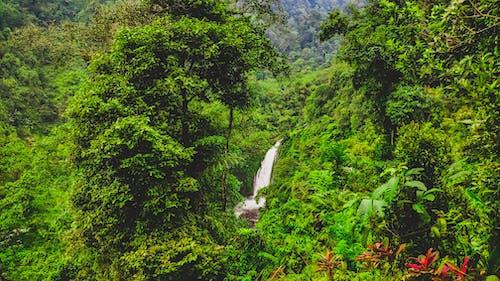 Fotobanka sbezplatnými fotkami na tému barbarský, cestovať, dažďový prales