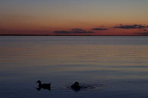 Gratis arkivbilde med ender, innsjø, klar dag