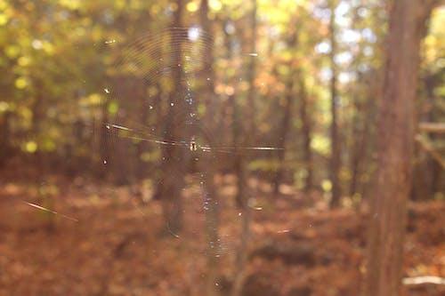 Gratis arkivbilde med edderkopp, falle, høst