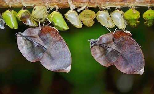 Gratis lagerfoto af insekt larver, insekter, kokoner, larver