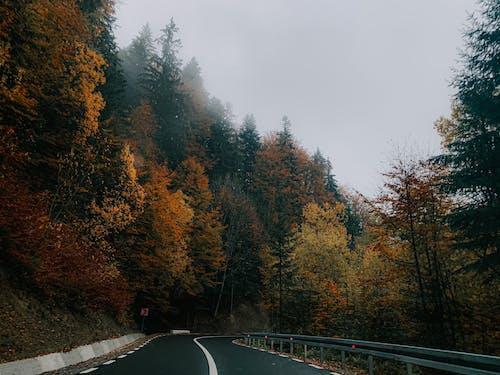 Asphalt road through bright forest