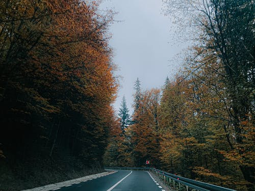 Empty asphalt pathway with trees