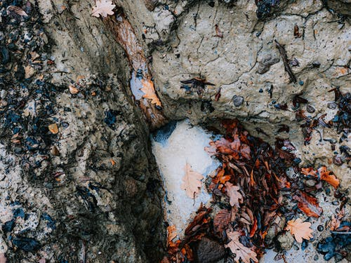 Detail of cracked and weathered natural stone with tree bark covered with fallen bright leaves in nature on autumn day