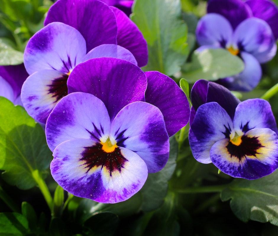 Purple 3 Petaled Flower