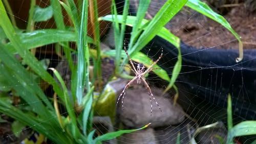 Free stock photo of nature, spider, spiderweb