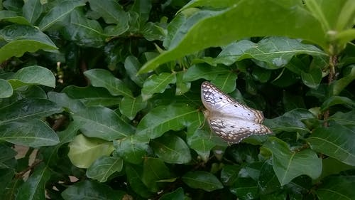 Free stock photo of butterfly, nature, sheets