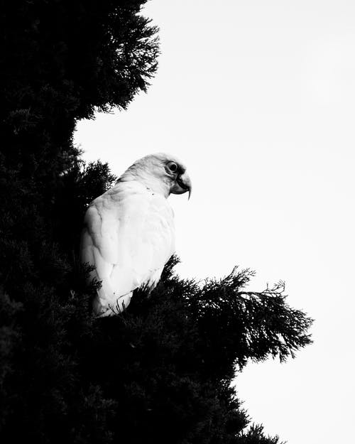 ağaç, ağaçta kuş, en az, kontrast ışığı içeren Ücretsiz stok fotoğraf