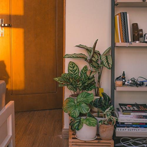 Immagine gratuita di armadietto, camera, casa, composizione floreale
