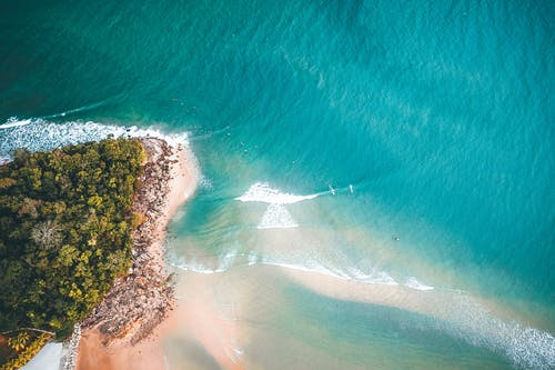 Tropical trees near sandy shore of turquoise sea
