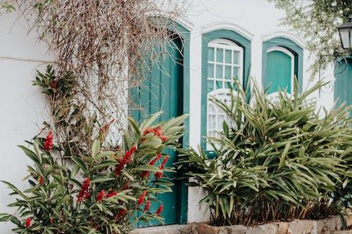 Fotobanka sbezplatnými fotkami na tému dom, rastlina, záhrada