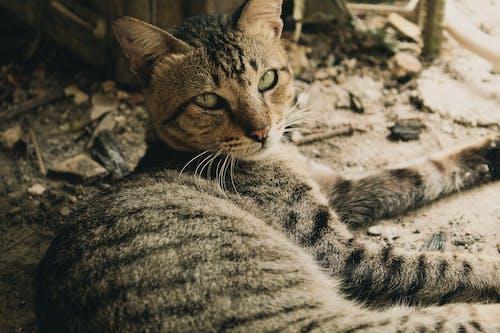 Immagine gratuita di a riposo, addormentato, adorabile, animale