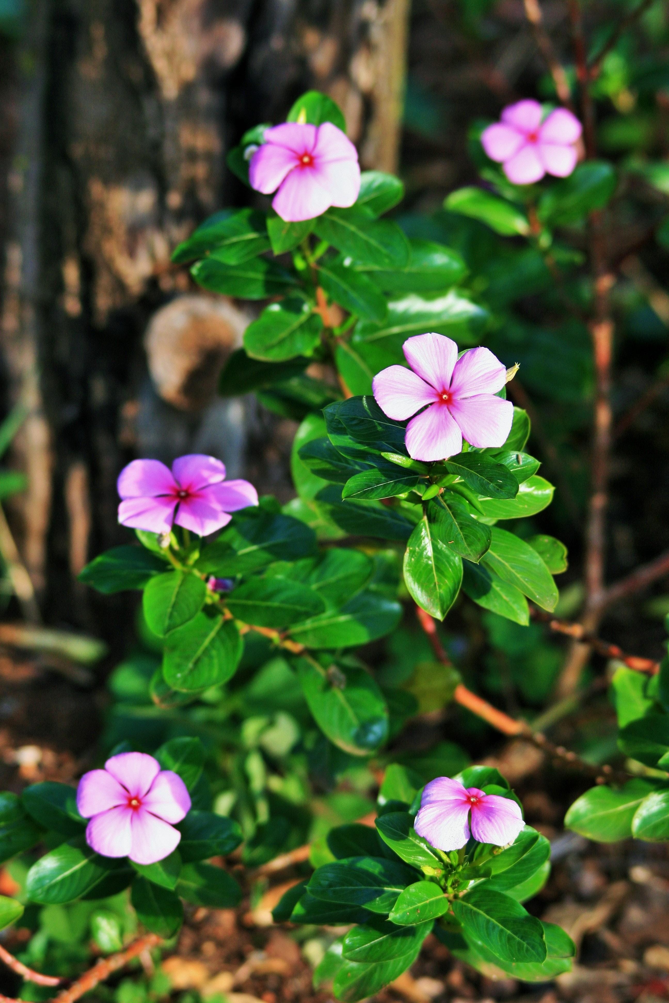 Free Stock Photo Of Flower Flowers Garden