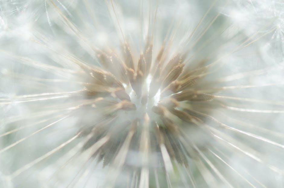 New free stock photo of flower, macro, dandelion