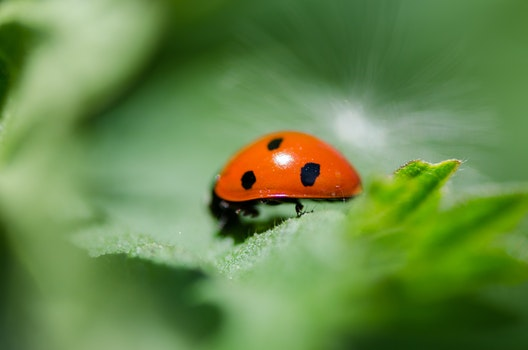 Free stock photo of animal, plant, leaf, blur