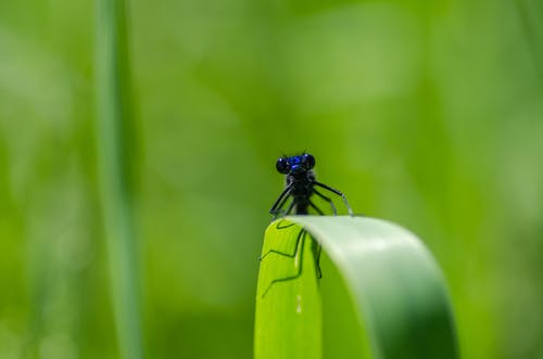 Selective-focus Photography of Black Insect on Green Leaf