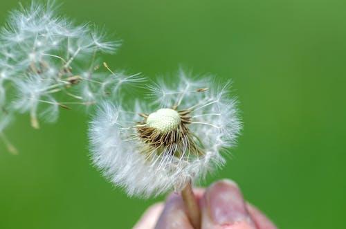 Kostnadsfri bild av blomma, delikat, detalj, flora