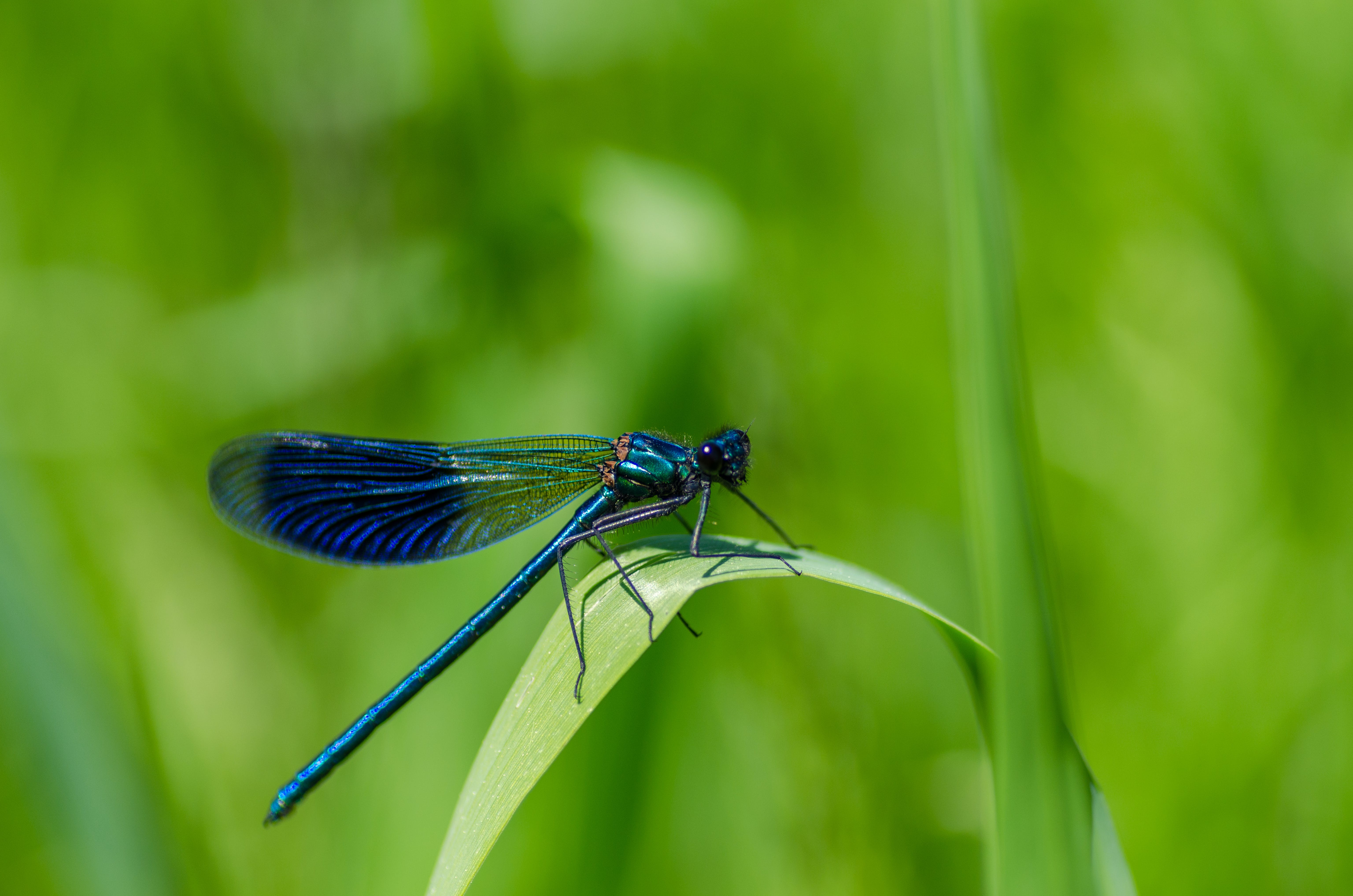 Selective Focus Photography of Dragonfly on Green Leaf