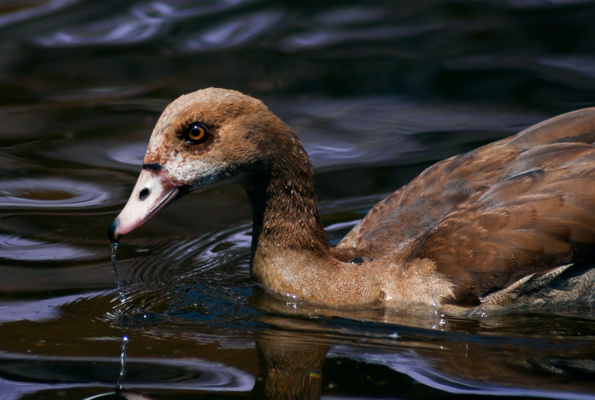 animal, avian, beak