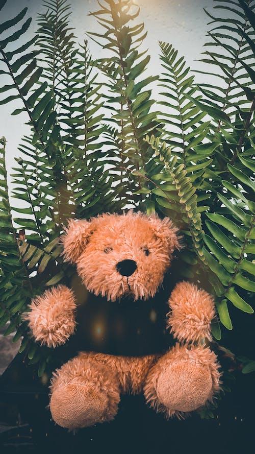 Fotos de stock gratuitas de adorable, amante del peluche, amor