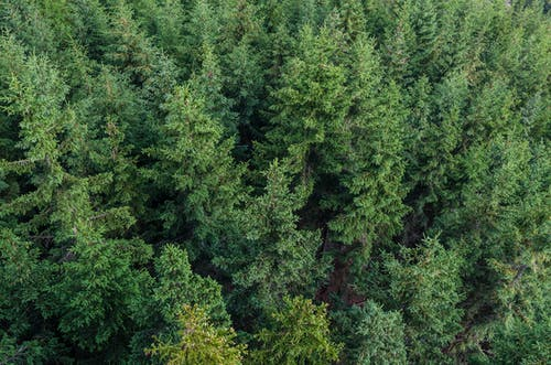 Forest Aerial Photography