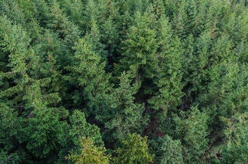 Kostenloses Stock Foto zu bäume, friedvoll, holz, idyllisch