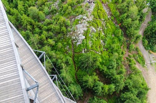 Kostenloses Stock Foto zu bäume, friedvoll, geländer, holz
